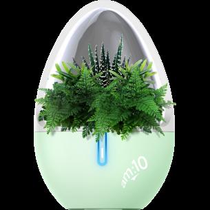 Natural Essential Oil Aroma Diffuser
